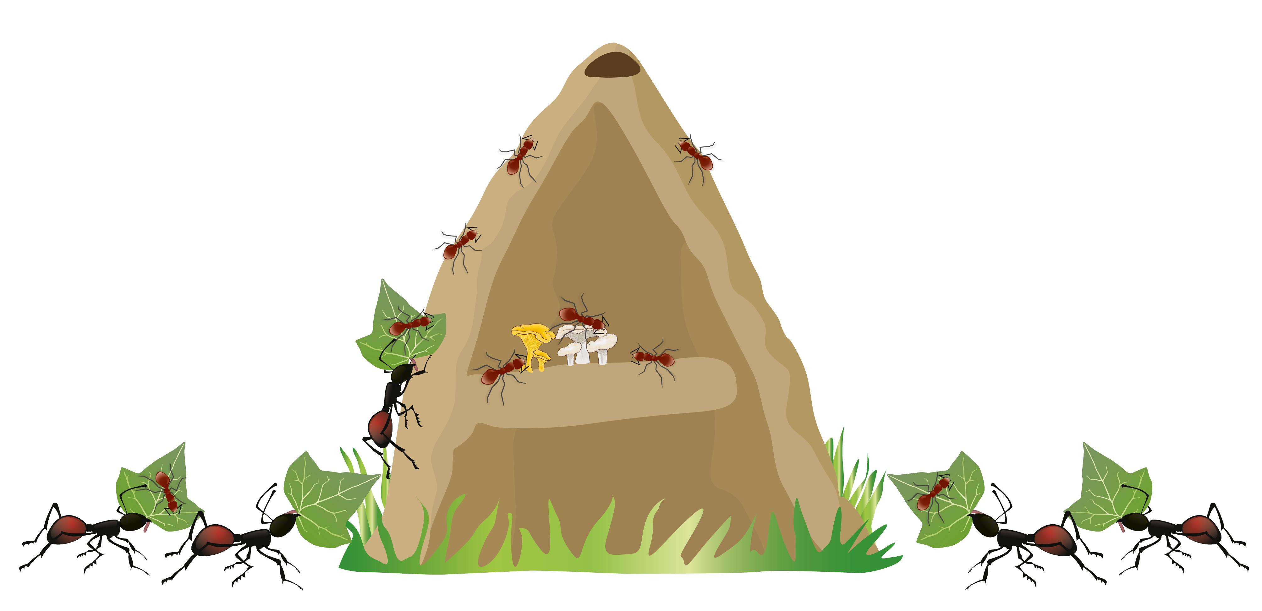 Myrer er super sociale væsner, hvor arbejderne helt har opgivet sin egen reproduktion for at arbejde for fællesskabet. Hvordan hænger det sammen i et evolutionært perspektiv, hvor naturlig selektion favoriserer selvisk adfærd?